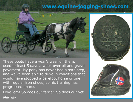 Mini horse road boot testimonial